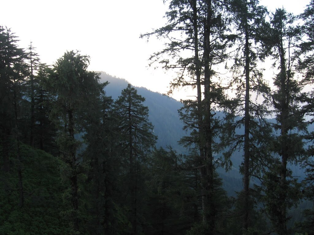 Forest land clearance- selecting land for setting up industry