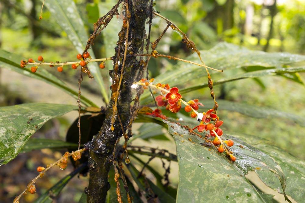 Indian Medicinal Plants – 2