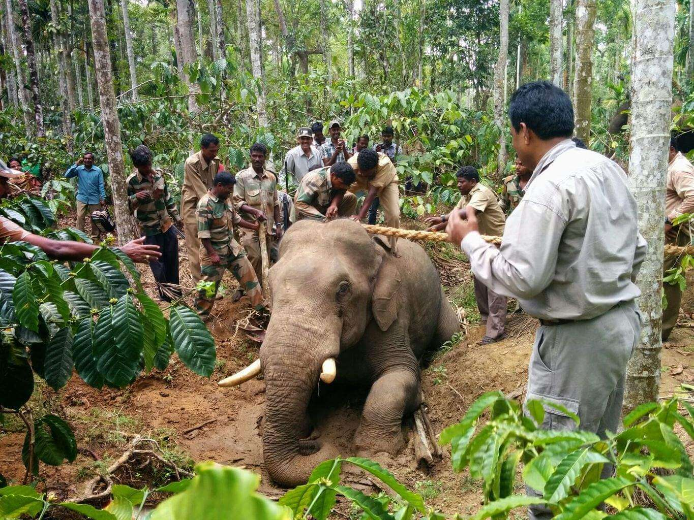 Man – Elephant conflict – a travelog of an Indian Forest Officer