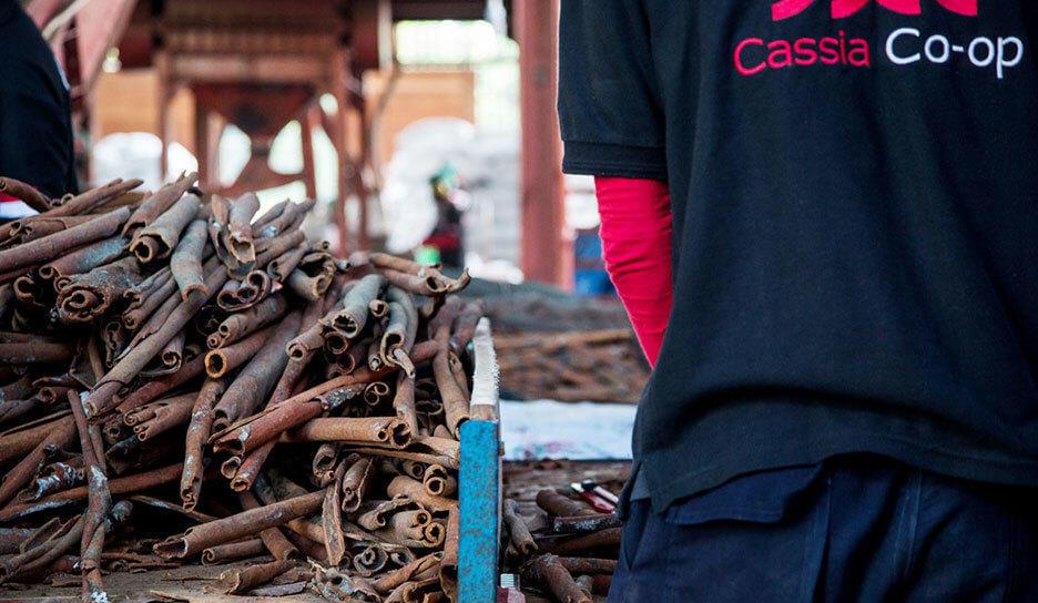 Indonesian Cassia