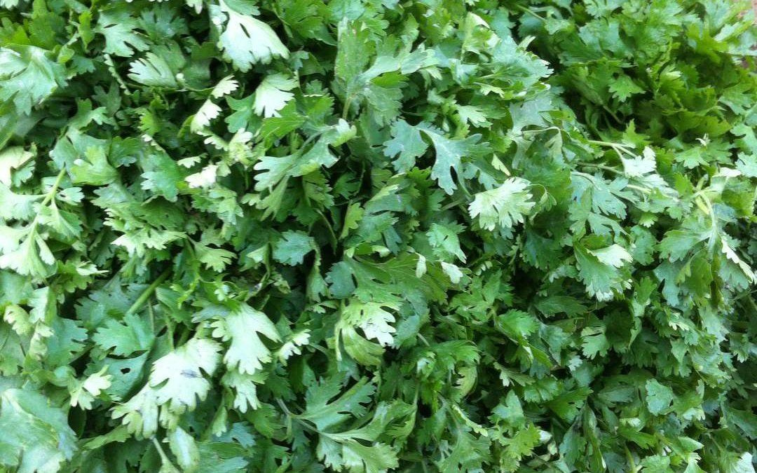 Some little known facts of coriander